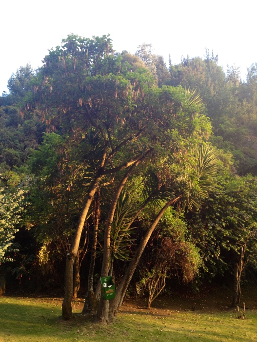 It's possible to find nature in some parts of Bogota