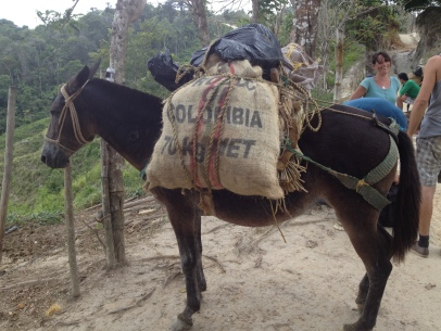 Our food is being carried by mules