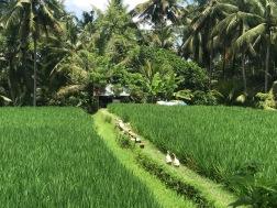 Day trek in Ubud