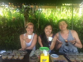Luwak coffee tasting
