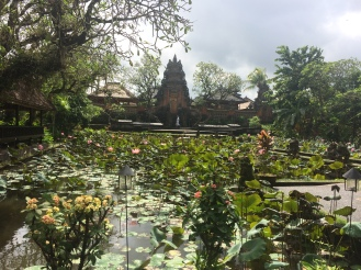 Lotus pond in Ubud