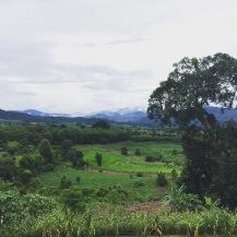 Stunning greenery in Pai