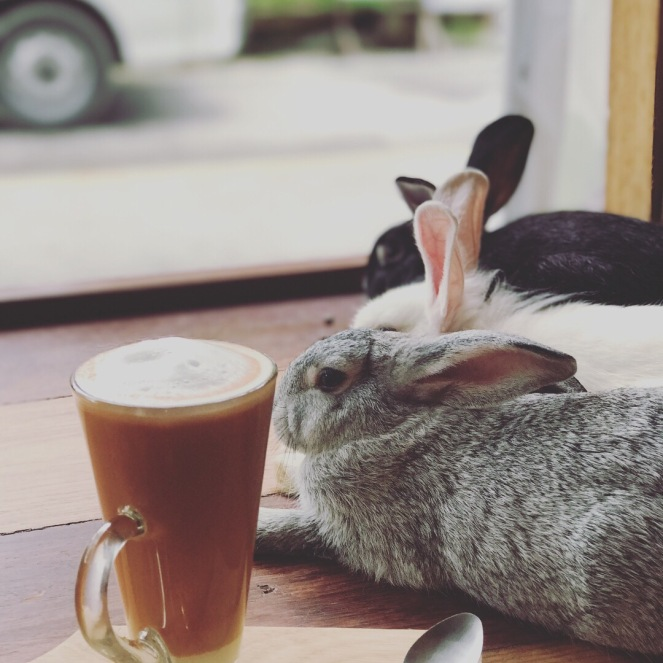 Tea with rabbits on the side @Rabbit Cafe